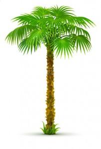 Palmboom_vrijstaand
